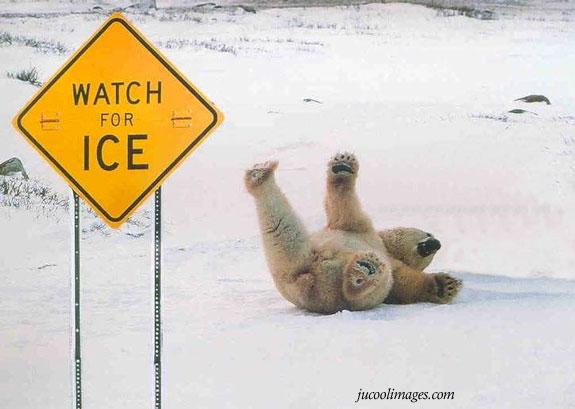 funny animals graphics