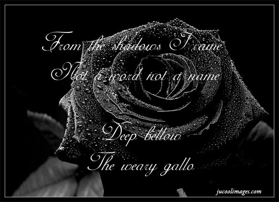 Black rose facebook pinterest graphics comments style black rose voltagebd Choice Image