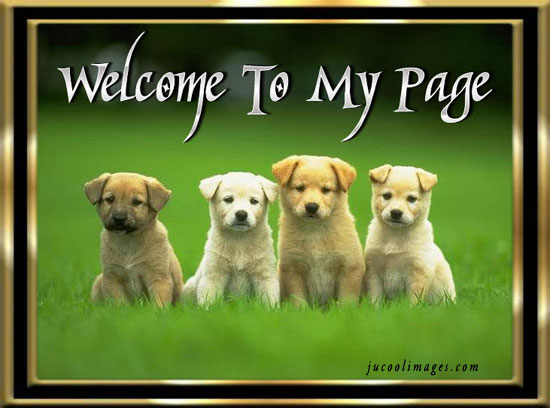 Image result for welcome to my page  dog pics